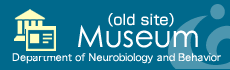 Department of Neurobiology and Behavior Museum(old site)